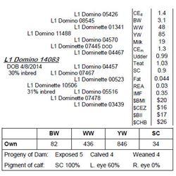Lot 14083 - L1 Domino 14083