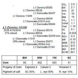 Lot 14106 - L1 Domino 14106
