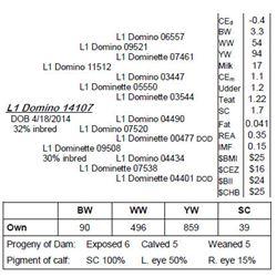 Lot 14107 - L1 Domino 14107