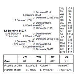Lot 14037 - L1 Domino 14037