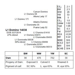 Lot 14038 - L1 Domino 14038