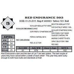 Lot 5 - RED ENDURANCE 503