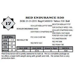 Lot 17 - RED ENDURANCE 530