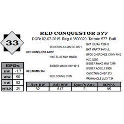 Lot 33 - RED CONQUESTOR 577