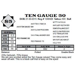 Lot 85 - TEN GAUGE 50