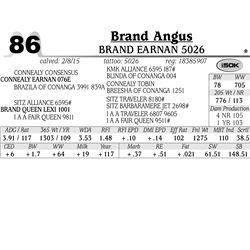 Brand Angus