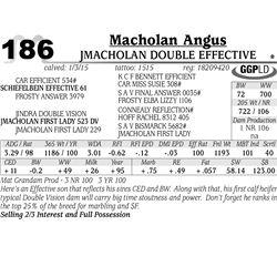 Macholan Angus