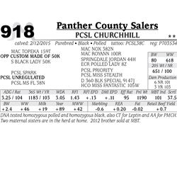 Panther County Salers