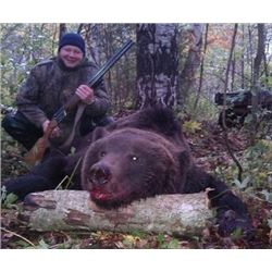 2 Russian Brown Bear for 2 hunters in the Northern Kirov Area