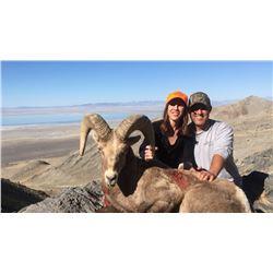 2017 Utah Box Elder, Newfoundland Mtn Rocky Mountain Bighorn Sheep Conservation Permit