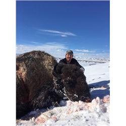 2017 Utah Book Cliffs, Wild Horse Bench/Nine Mile Bison Conservation Permit