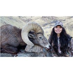 Antelope Island California Bighorn Sheep Conservation Permit