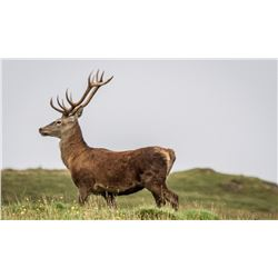 WEST HIGHLAND HUNTING / MAGIC SAFARI LODGES: 2-Day Trophy Stag Hunt for One Hunter and One Non-Hunte