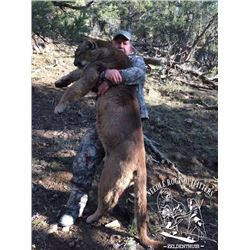 NEEDLE ROCK OUTFITTERS: 7-Day Mountain Lion Hunt for One Hunter in Colorado or Utah - Includes Troph