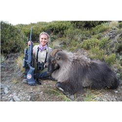 KIWI SAFARIS: 5-Day Tahr Hunt for Two Hunters and Two Non-Hunters in New Zealand - Includes Trophy F