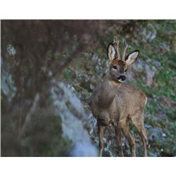 TROPHY HUNTING SPAIN: 4-Day Roe Deer Hunt for One Hunter and One Non-Hunter in Spain - Includes Trop