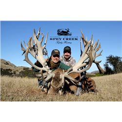 SPEY CREEK TROPHY HUNTING: 5-Day Red Stag Hunt for Two Hunters in New Zealand - Includes Trophy Fees