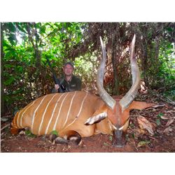 MAYO OLDIRI SAFARIS: 14-Day Bongo Hunt for One Hunter and One Non-Hunter in Cameroon