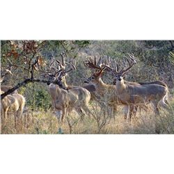 STAR S RANCH:  3-Day Whitetail Deer Hunt for One Hunter and One Non-Hunter in Texas - Includes Troph