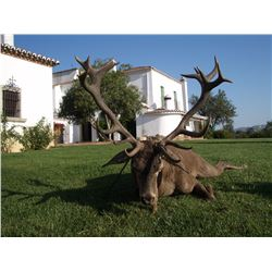 ESPACAZA JOSE MALLO: 4-Day Red Stag, Mouflon or Roe Deer Hunt for Two Hunters in Spain - Includes Tr