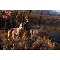 "PAT PAULEY ART: ""Autumn Retreat"" - Original Whitetail Painting by Wildlife Artist Pat Pauley"