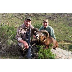 CAZA HISPANICA SPAIN: 4-Day Mouflon Sheep Hunt for Two Hunters in Spain - Includes Trophy Fees