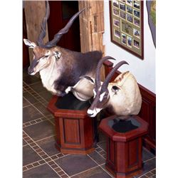 JULIAN & SONS: Matching Walnut Bases for Pedestal Taxidermy Mounts