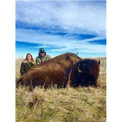 WILDCAT SPRINGS: 2-Day/2-Night American Bison Hunt for One Hunter in Oklahoma