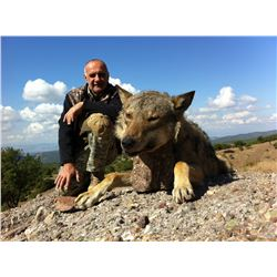 SAFARI INTERNATIONAL: 7-Day Wolf Hunt for One Hunter and One Non-Hunter in Macedonia - Includes Trop