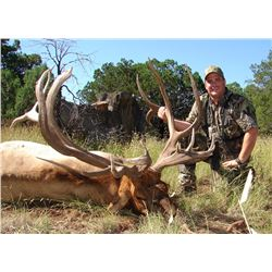 WHITE MOUNTAIN APACHE: Governor's Tag for One Hunter for a Rocky Mountain Elk Hunt in Arizona - Incl
