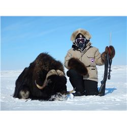 CANADA NORTH: 8-Day Muskox Hunt for One Hunter in Canada - Includes Trophy Fee