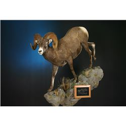 LIFE-SIZE NORTH AMERICAN SHEEP MOUNT