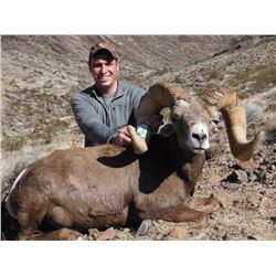 CALIFORNIA DESERT BIGHORN SHEEP PERMIT (Open-Zone Tag)