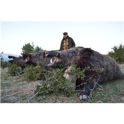 4-DAY ANATOLIAN WILD BOAR HUNT FOR 2 HUNTERS OR 1 HUNTER AND 1 NON-HUNTER