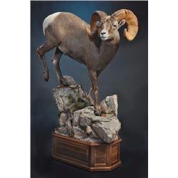 LIFE-SIZE WILD SHEEP MOUNT