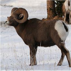 ALBERTA MINISTER'S SPECIAL BIGHORN SHEEP PERMIT