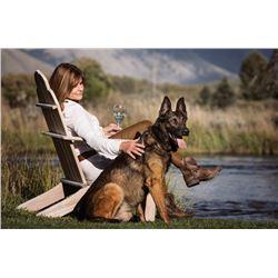 FRIEND, BEST PROTECTION, BEST OPTION - SVALINN DOG