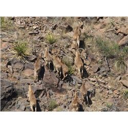 5-DAY TROPHY AOUDAD HUNT FOR 2 HUNTERS AND 2 NON-HUNTERS -GUNWERKS RIFLE WITH NIGHTFORCE OPTICS AND