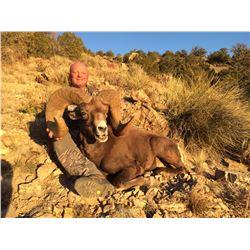NEW MEXICO DESERT BIGHORN SHEEP PERMIT