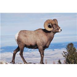 OREGON BIGHORN SHEEP PERMIT