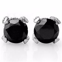 Genuine 3.75 ctw Black & White Diamond Solitaire Stud Earrings 14K White Gold - 11855-#66G7R