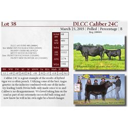 DLCC Ranch Bulls