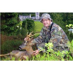 Balmoral - Roe Deer