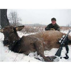 Bob Northrup - Cow Elk or Mgmt. Whitetail