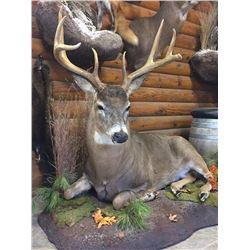 Natures Pride Taxidermy
