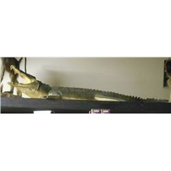 FULL SIZE TAXIDERMY CROCODILE MOUNT - REPRODUCTION