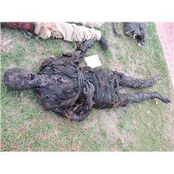 AUTOPSY DEAD BLOODY ROTTEN ZOMBIE BODY 07 I AM LEGEND