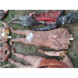 AUTOPSY DEAD BLOODY ROTTEN ZOMBIE BODY 11