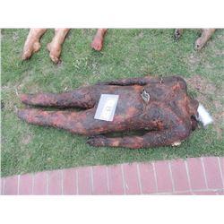 AUTOPSY DEAD BLOODY ROTTEN ZOMBIE BODY 18