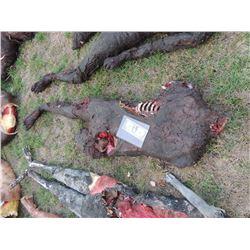 AUTOPSY DEAD BLOODY ROTTEN ZOMBIE BODY 19
